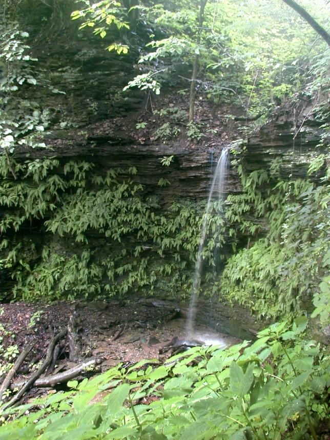 Falls Run, Hays Woods